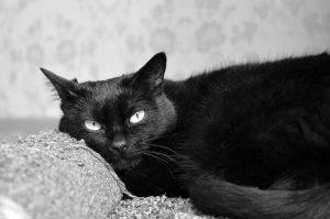 black-cat-1636980_1920