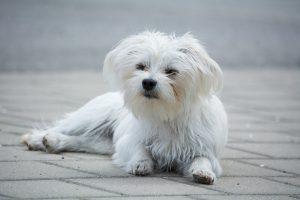 dog-1481270_1280