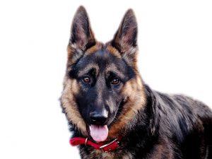 dog-777993_1280